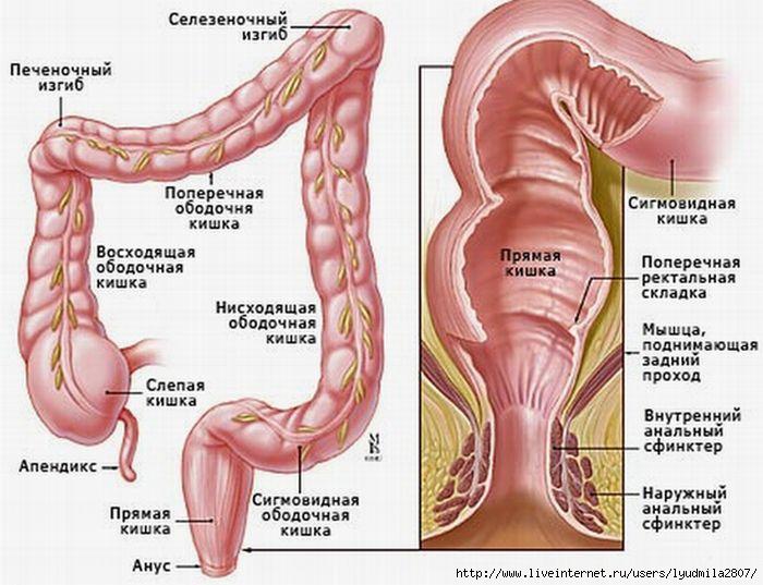 Причины и лечение заворота кишок