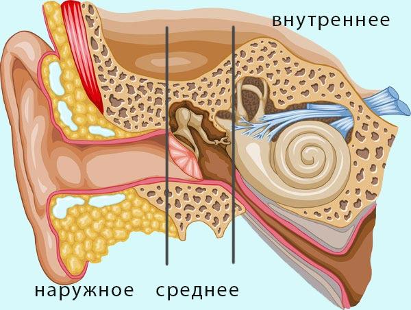 наружное среднее внутреннее ухо
