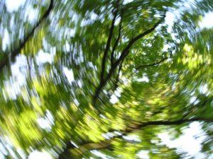 деревья кружатся