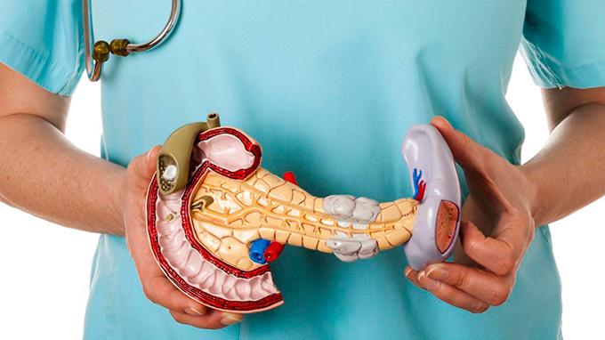 Поджелудочная железа - важный орган человеческого организма.