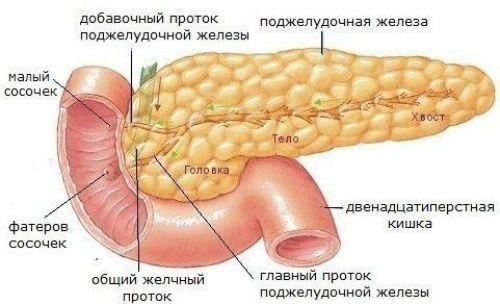 Как болит поджелудочная железа у человека, симптомы
