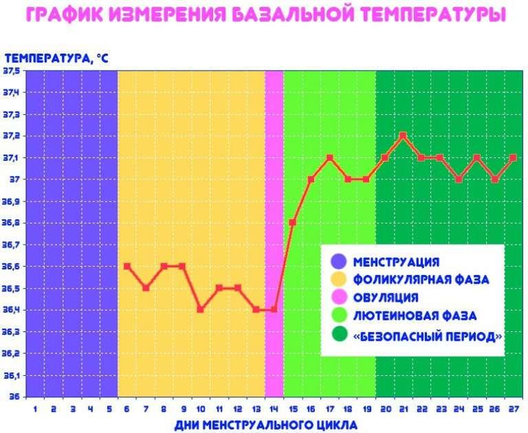 Базальная температура перед месячными по вечерам