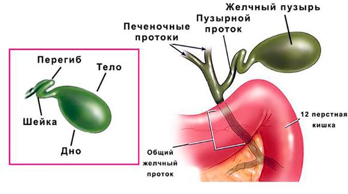 Перегиб желчного пузыря: симптомы и лечение