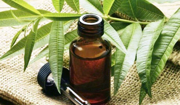 Состав и лечебные свойства чайного дерева