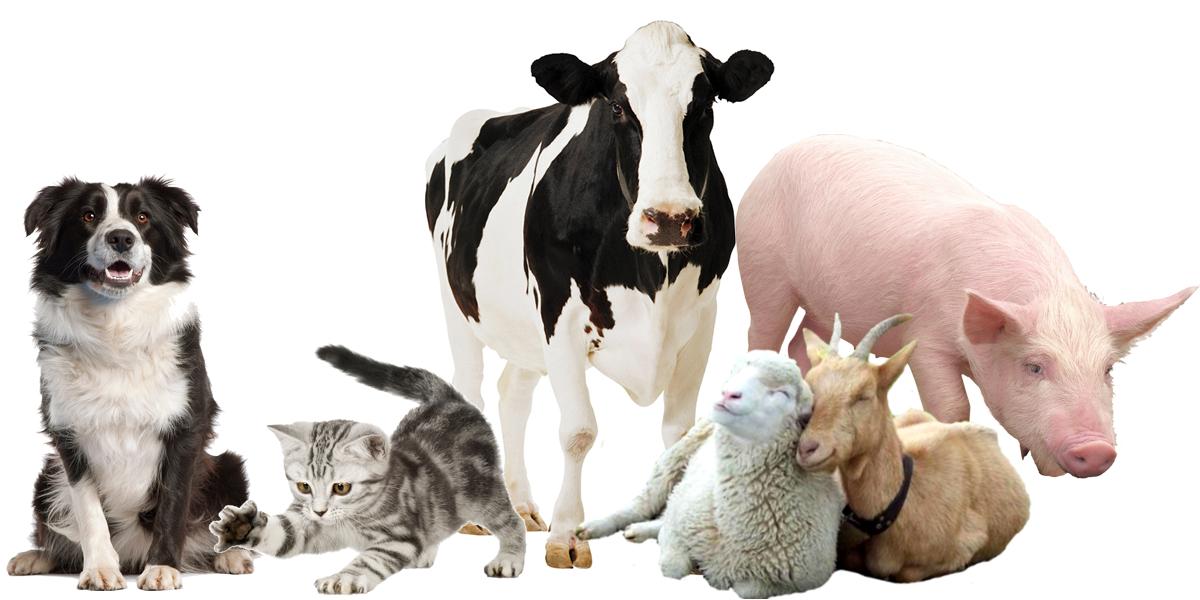 Домашние животные как причина появления дерматита