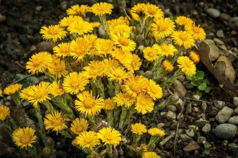 Какие помогают травы от кашля для детей