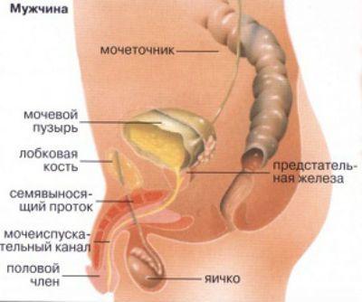 Цистит, симптомы у мужчин и как лечить народными средствами