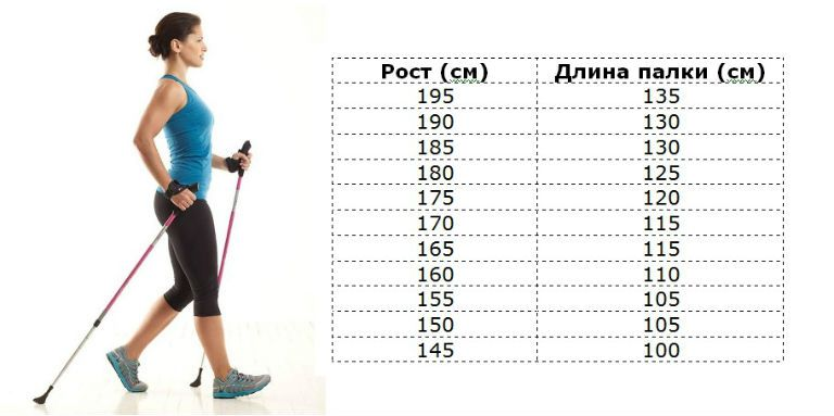 Длина палок для скандинавской ходьбы