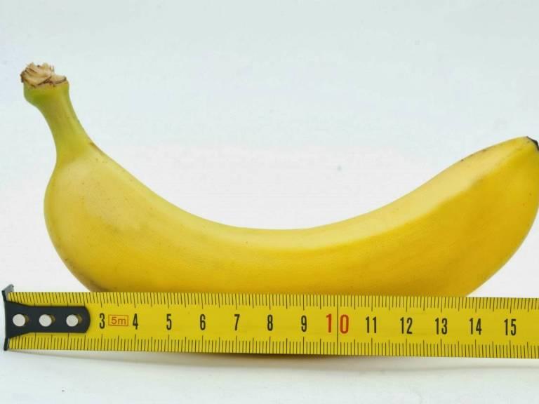 Средний размер члена мужчины
