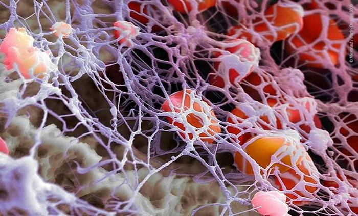 Рак и фибриноген