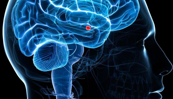 изменения в мозге при стрессе