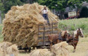 Пневмонит легкое фермера