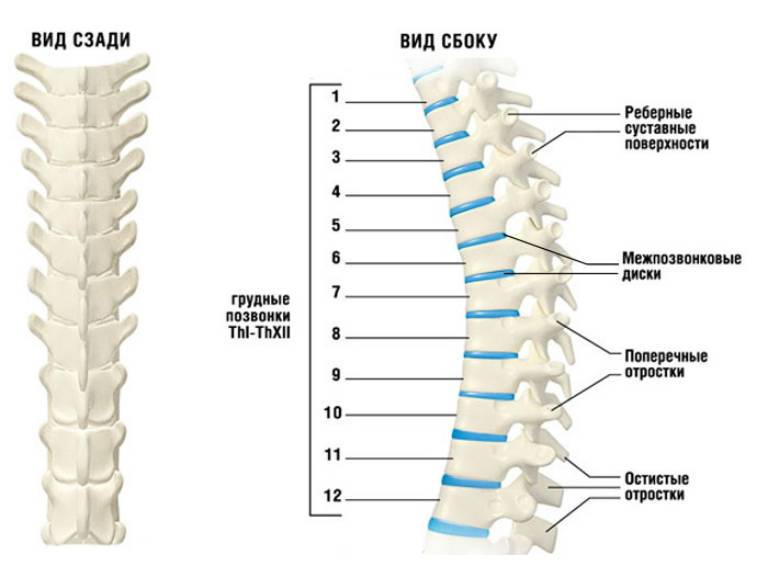 Лечение остеохондроза грудного отдела позвоночника