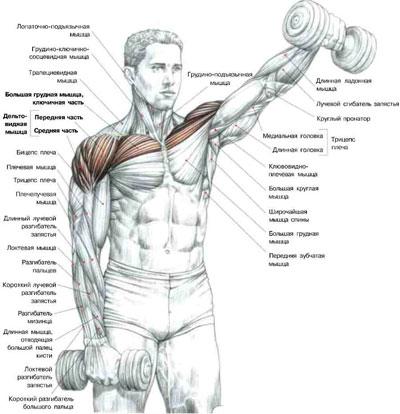 Упражнения для рук, чтобы не висела кожа