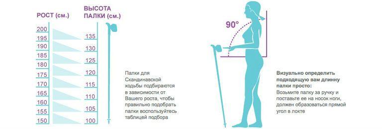 Как правильно ходить с палками для скандинавской ходьбы